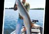 Fishing Trips in Canada