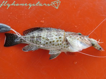 white-tail-grouper