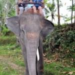 Une balade à dos d'éléphant à Bali!