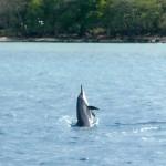 Nager avec des dauphins…