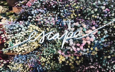 Dem Alltag ENTFLIEHEN, Das Bild zeigt kleine Blüten in Pastelfarben mit dem Wort escape im Vordergrund