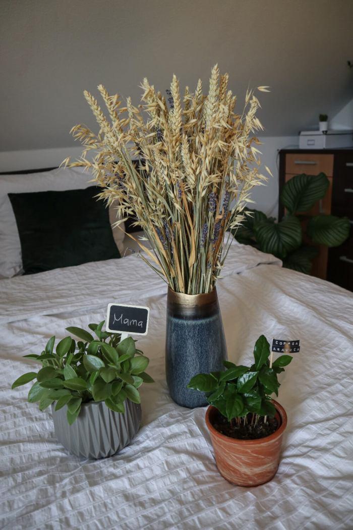 Blogbeitrag: GESCHENKIDEEN zum Muttertag, das Bild zeigt Pflanzen und Trockenblumen, die sich ideal als Geschenk eignen
