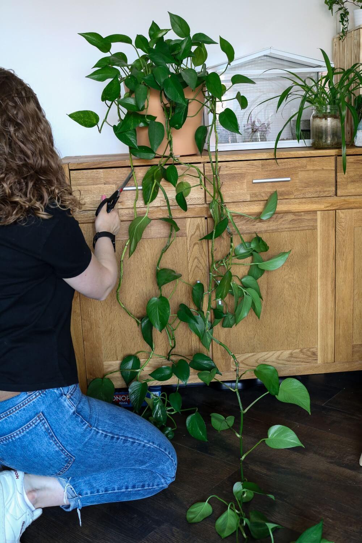 5+ pflegeleichte Zimmerpflanzen | Anfänger