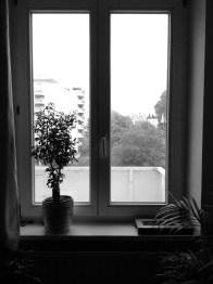 Fünf Fenster - No. 5 || Foto: Ulf Cronenberg, Würzburg
