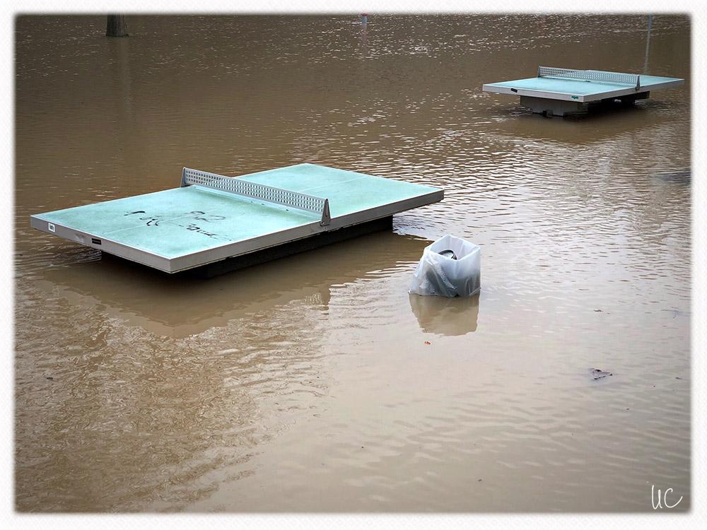 Hochwasser am Main– No. 5