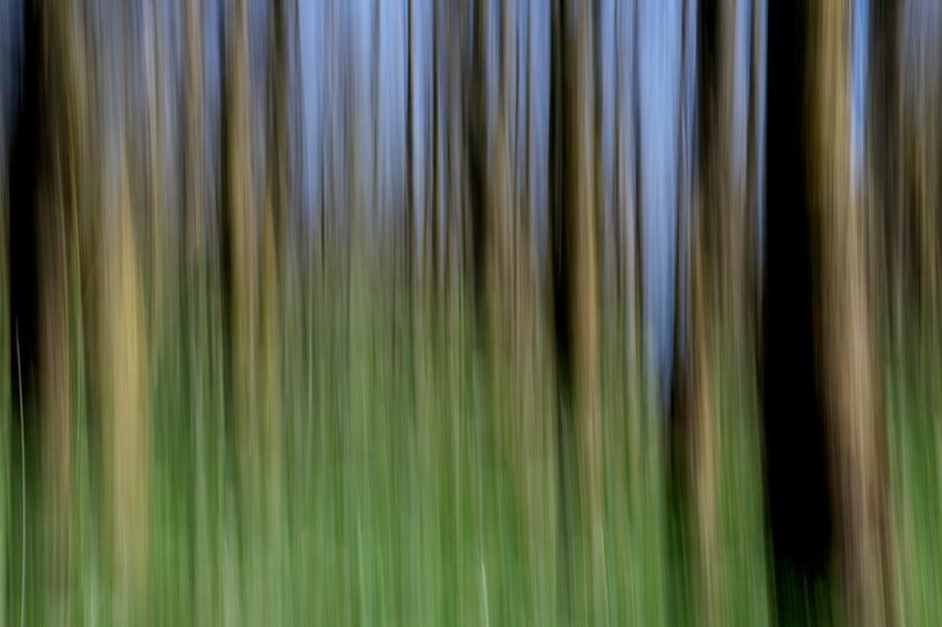 Panning (2) – Bilder von der Rhön