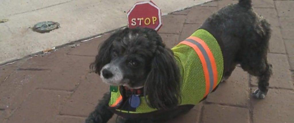 Han atropellado a mi perro, ¿qué hacer para que pague el seguro?
