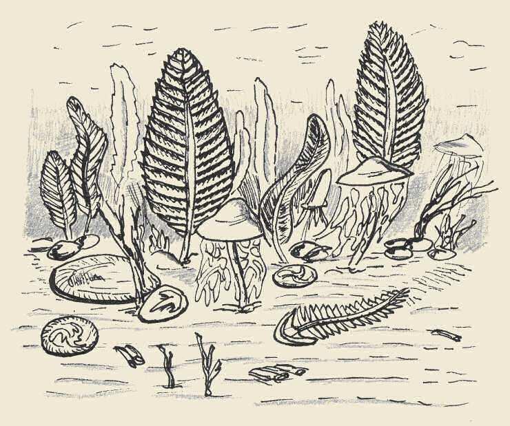 Ediacara life forms