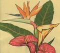 Garden Club of Cape Coral