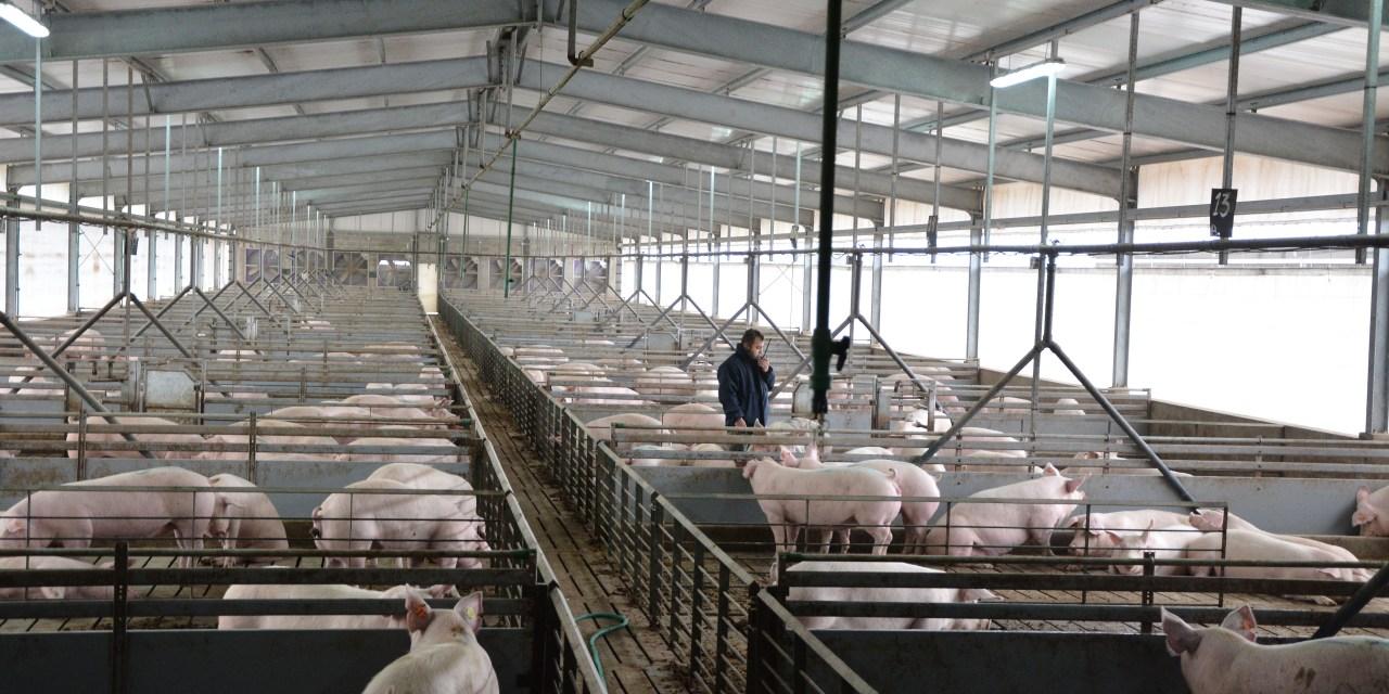 Cotagro producirá energía eléctrica a partir de los desechos del Criadero de Cerdos