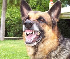 General Cabrera -Menor mordido por un perro