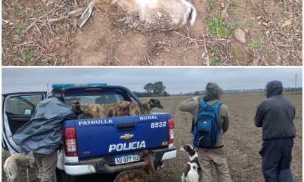 Tres personas de Cabrera detenidas por cazar en un campo