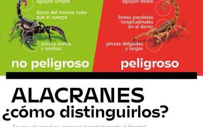 Prevención para evitar presencia de alacranes y dengue