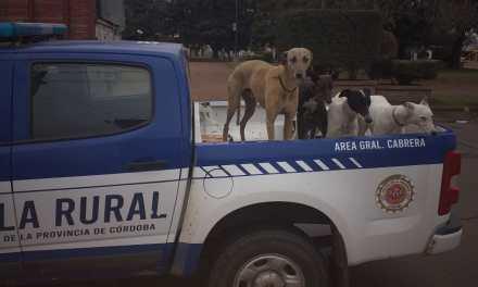 3 detenidos con 7 perros galgos