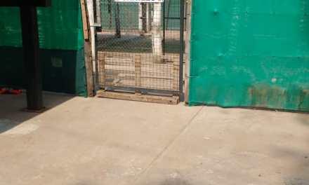 Mejoras en el refugio canino