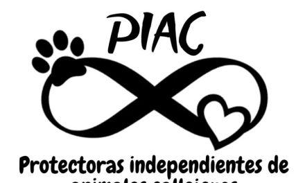 PIAC quiere incrementar la venta de cartones y alumnio para solventar gastos de los perritos