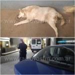Deheza: Imputación por maltrato animal