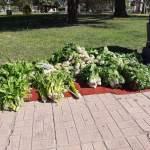 Venta de verduras del Ipea 291 en la plaza