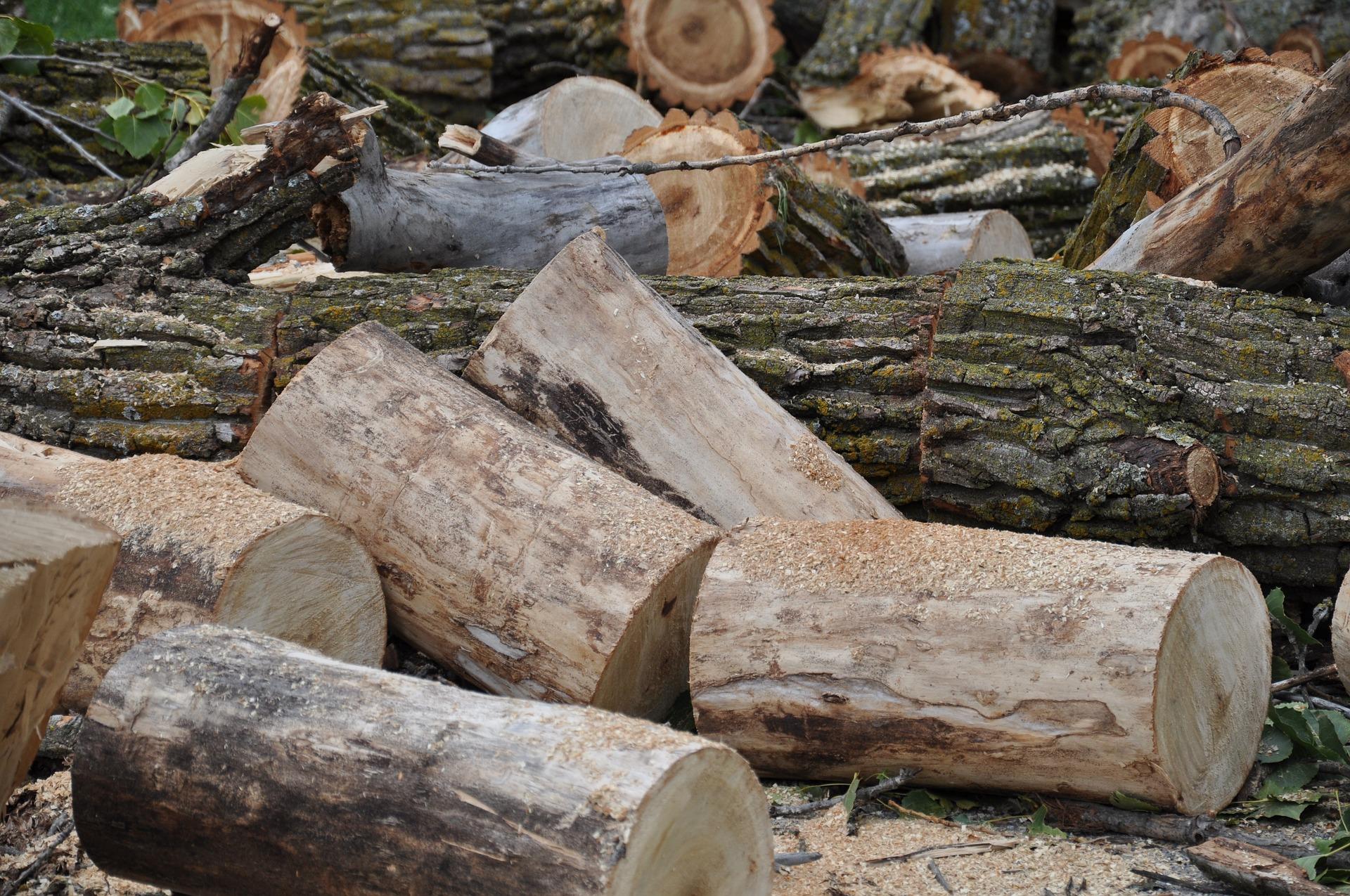 Functions Of A Tree Service Company   Fnamoc Homes