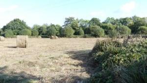 source : X.Métay - FNE Pays de la Loire - parcelle agricole sur la ZAD de NDDL
