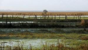 Source : F. Vigouroux - Estuaire de la Loire