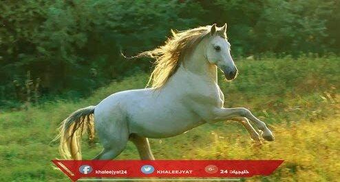 معلومات عن الحصان الاندلسي