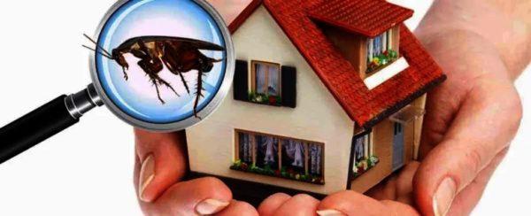 شركات مكافحة الحشرات بجدة بالعناوين و الهاتف