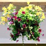 軒下の花籠|フォーカシング・ネットワーク
