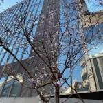 2020年1月2日冬桜