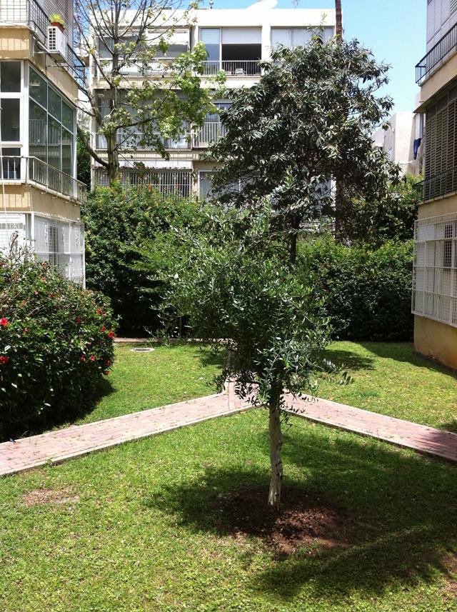 Giardino condominiale di  Tel Aviv