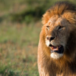 4 Lessons from Daniel for Today's Christians