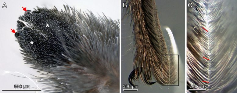 Microscope Images of Spider Hairs