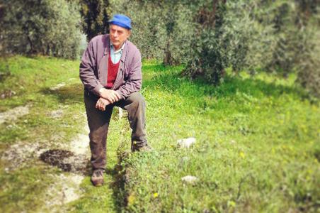 dino-estate-olives.jpg