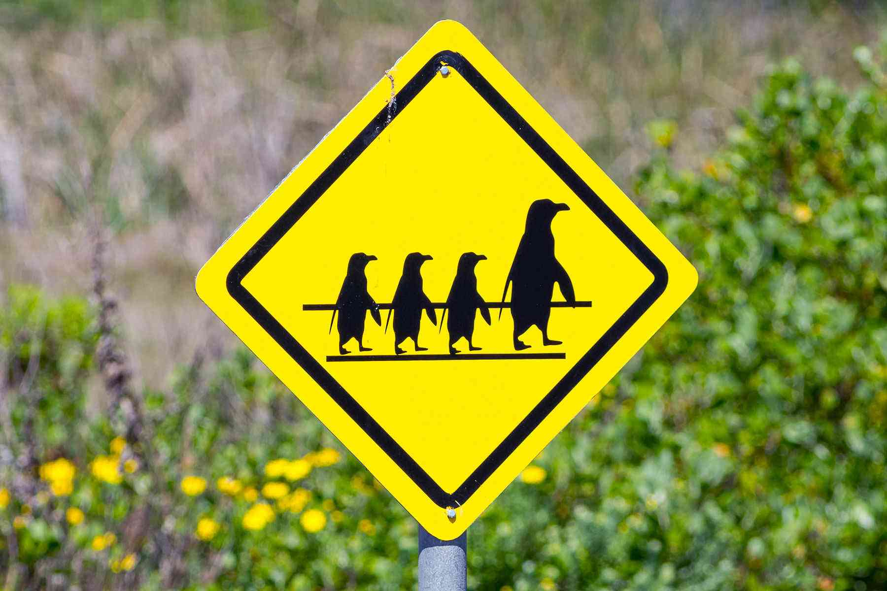 7 Odd Street Signs Meant To Help Travelers Fodors