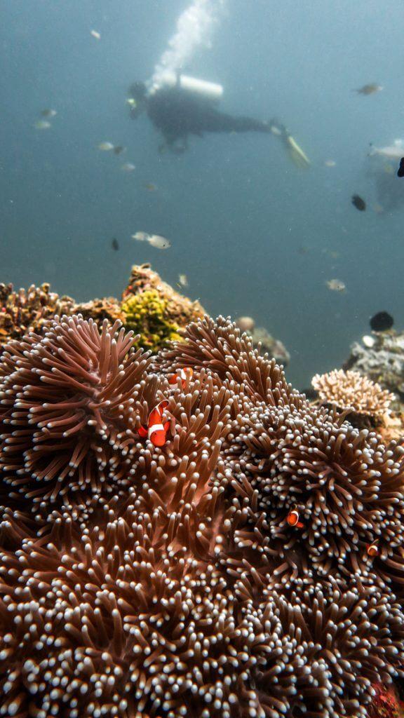 duiken el nido-11