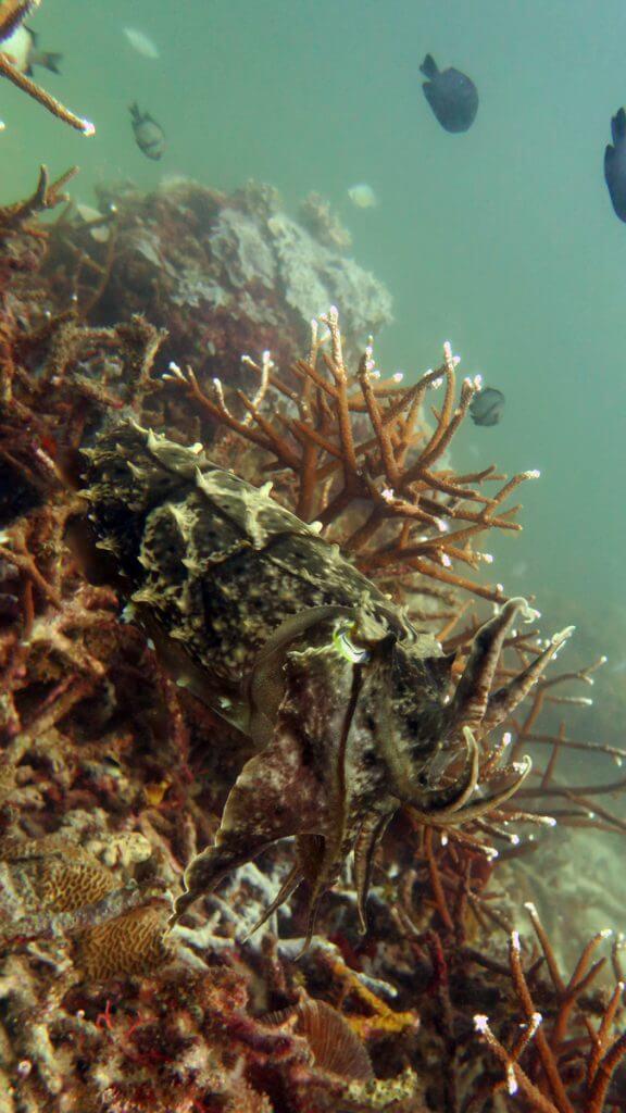 duiken el nido