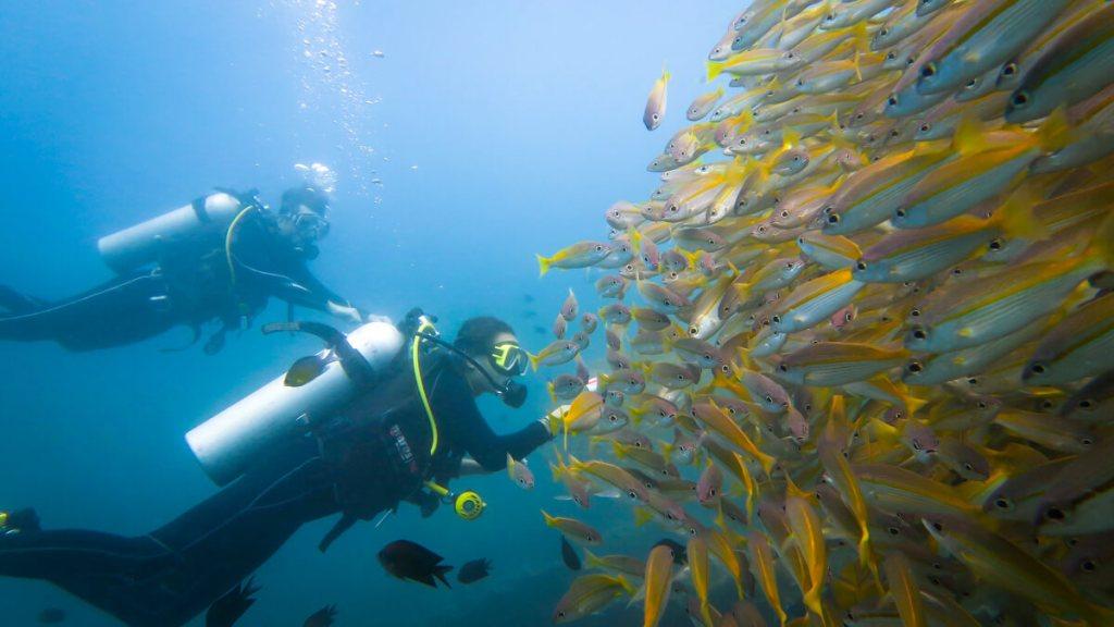 duiken el nido yellow snappers