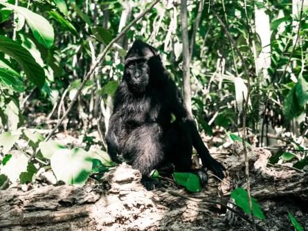 Tangkoko National Park: de jungle van de zwarte makaak en het spookdiertje