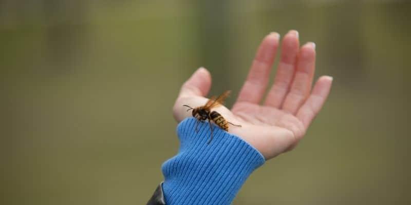 elin üzerindeki arı