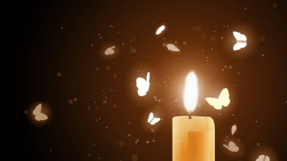 güveler neden ışığa gider