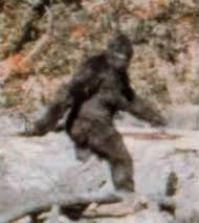 Bigfoot from Patterson-Gimlin film
