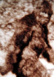 Bigfoot closeup