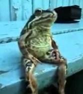 Sitting frog