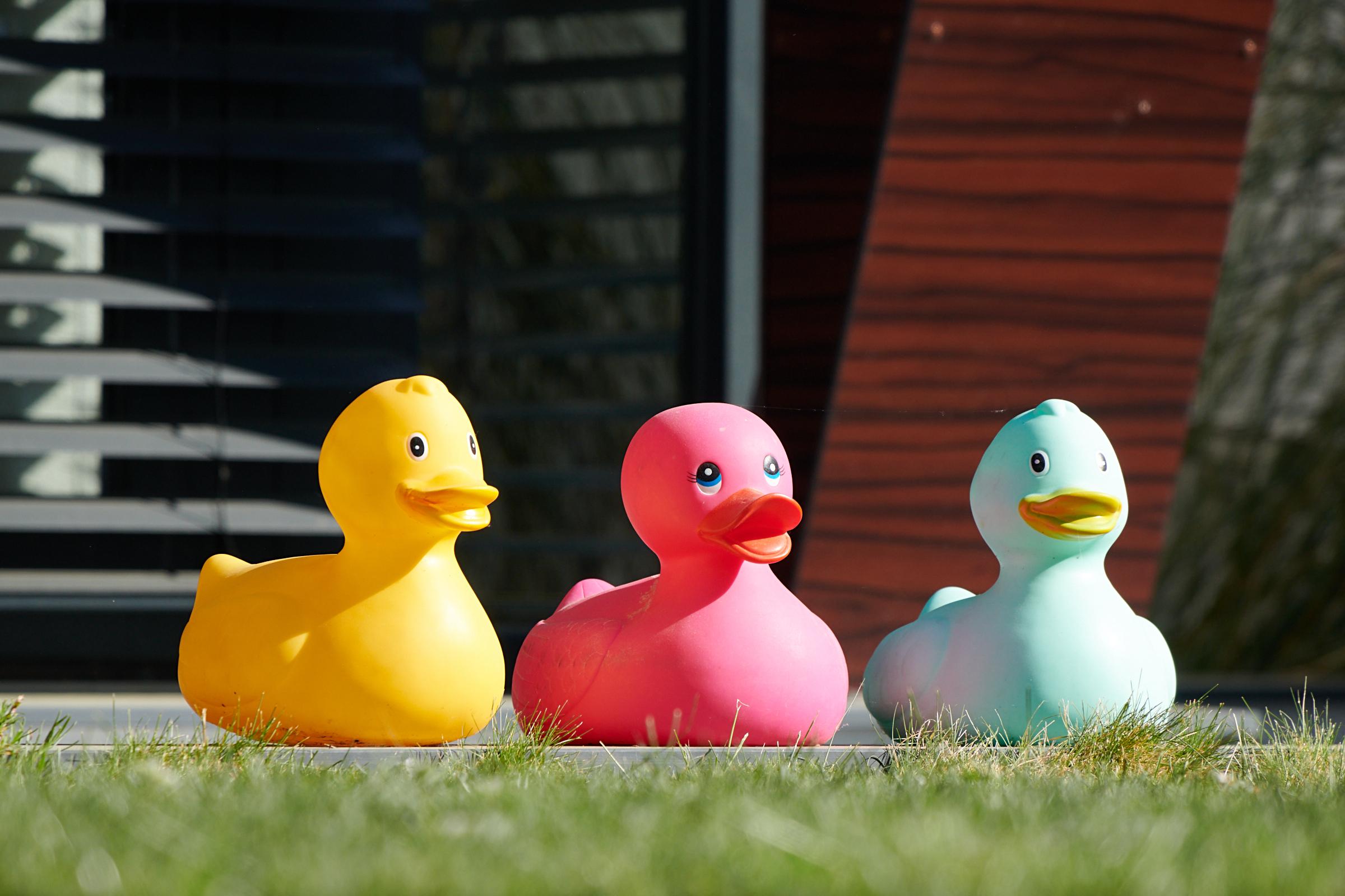 April 2020: drei fröhliche Enten