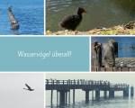 Wasservögel an der Ostsee