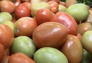 prudente-tomate