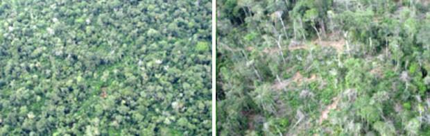 Imagem do Inpe mostra degradação de intensidade moderada (esquerda), com área em regeneração após exploração madeireira, e pátios de toras ainda evidentes, e degradação de intensidade alta, com exploração madeireira ativa e grande proporção de solo exposto (Foto: Divulgação/Inpe)