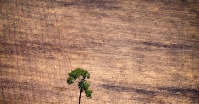 (Foto Greenpeace)