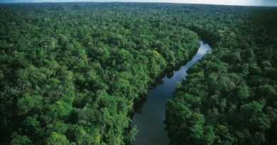 417_2522-alt-floresta amazonica