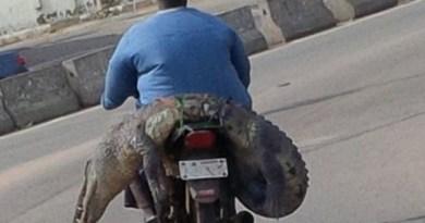 Cena foi flagrada em rua no estado de Ogun (Foto: Reprodução/Facebook)